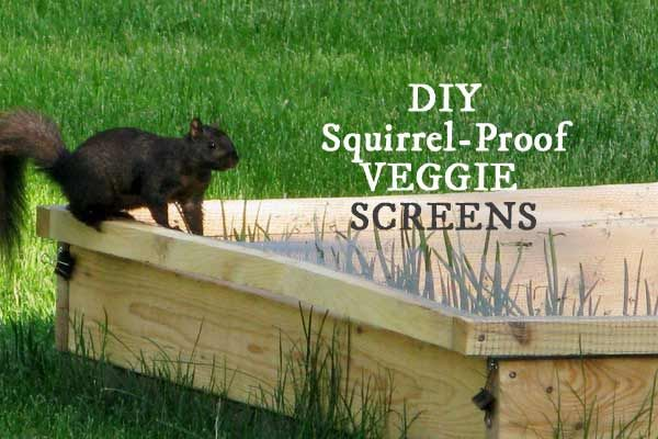 Keep Critters Out Of Veggie Beds With These Screens Empress Of Dirt Animal Proof Garden Squirrel Proof Garden Garden Animals