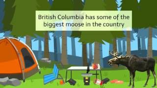 This is a great video assembled by http://huntfgs.com/hunts/  BC moose hunts are probably the most famous on earth, and also the size and aggressiveness of those animals throughout the rutting season once the British Columbian government allows them to be hunted is legendary in hunter circles. These animals can get quite large in Western Canada, especially the bulls, what are the only moose that are permitted to be hunted legally.  Fredlund Guide Service Inc. 13385, 215 Rd Dawson Creek, BC…