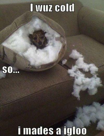 My dog would do this #humor