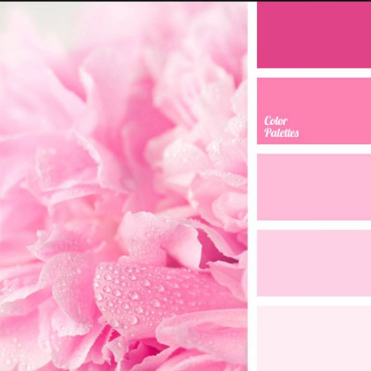 17 best images about l shades of pink paint colours l on - Best soft pink paint color ...
