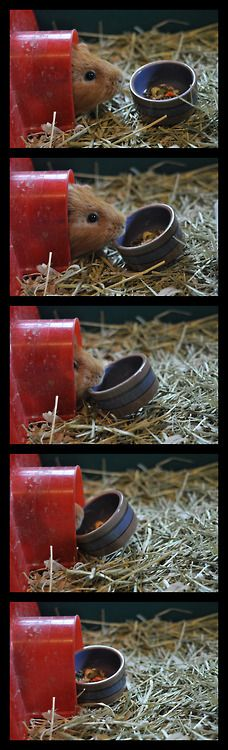 my guinea pigs do this all the time, lol
