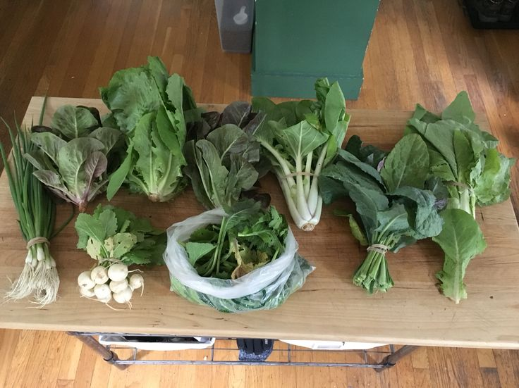 Week 1 - June 10, 2016 | Washed & used salad spinner on: Green Romaine lettuce, Breen mini-heads red lettuce, Dinosaur kale, Mustard greens | Stored in fridge unwashed: Bok Choy, Napa Cabbage - Bilko, Scallions, Hakurei Turnips