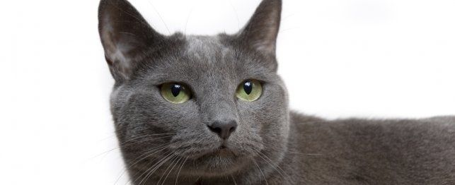 Naming Your Grey Cat: Name Ideas for Cats with Grey Haircoats