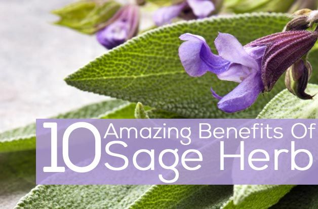 Sage Herb Uses   10 Amazing Benefits Of Sage Herb For Skin, Hair And Health