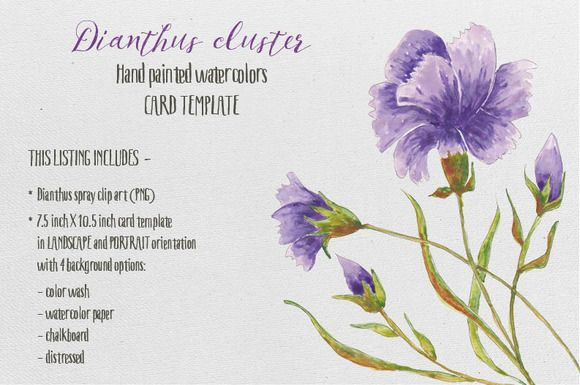 Watercolor card template: Dianthus by Lolly's Lane Shoppe on Creative Market