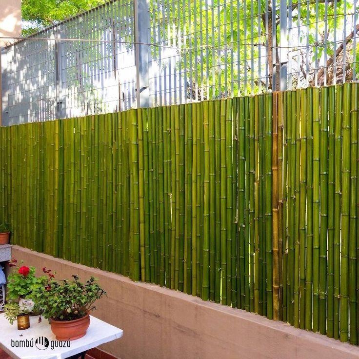 jardin bambu