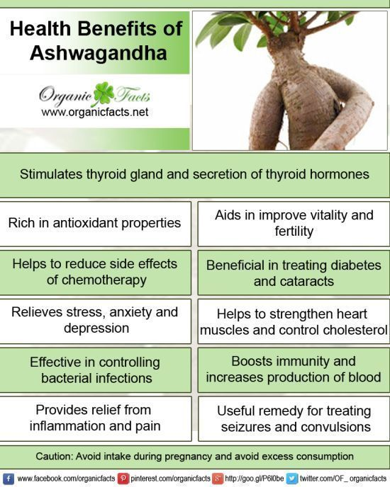 Ashwagandha or Indian Ginseng has a wide range of health benefits which include fight against cancer and diabetes, reduction in inflammation, arthritis, asthma, hypertension, stress, rheumatism, supply of anti-oxidants and immunomodulation.