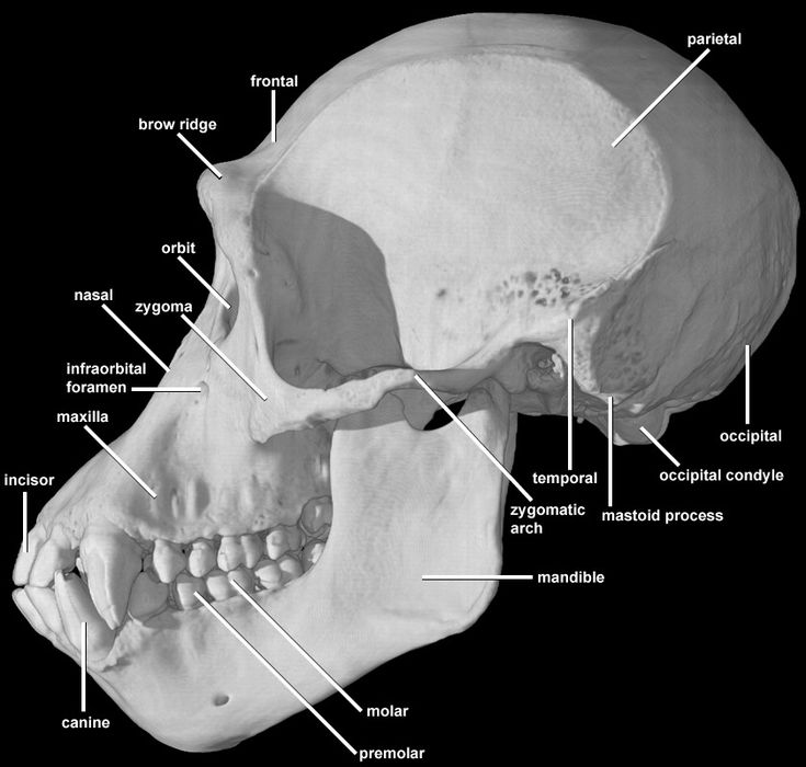17 Best Images About Anatomy Reference On Pinterest