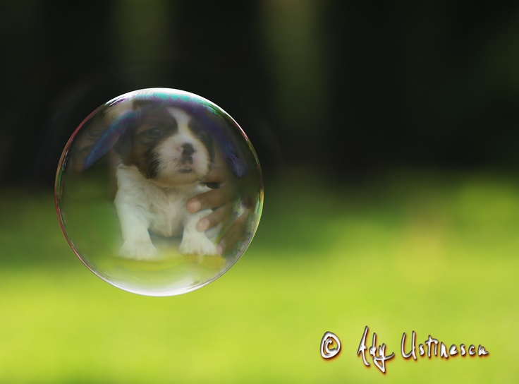 All you need is a big dog and a small bubble....No....A big bubble and small dog. I had the dog, I found the bubble. Enjoy!