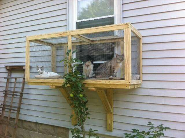 The Kitties Would Love This Window Box Closed In Patio Cathouse Cat Window Outdoor Cat Enclosure Cat Enclosure