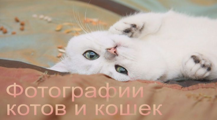 Фотографии котов и кошек: смешные, милые и любимые!