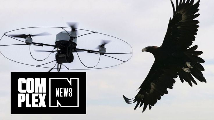 #VR #VRGames #Drone #Gaming Cops Training Eagles to Take Down Drones Alex Hudgens, animals, complex, Complex (Magazine), Complex Life News, complex media, complex tv, cool, culture, current affairs, DJI Phantom, Drone Videos, Drones, Dutch, EAGLES, edgy, Entertainment, Funny, Guard From Above, Magazine, man, Men, netherlands, news, Police, Quadcopters, raptors, technology, Weapon, young man #AlexHudgens #Animals #Complex #Complex(Magazine) #ComplexLifeNews #ComplexMedia #Co