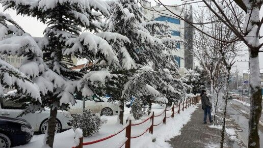 kardan birgün daha... #kar #snow #agac #beyaz