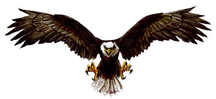 Aguilas dibujos en color - Imagui