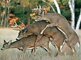 fotos de animales salvajes copulando - Buscar con Google