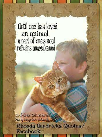 Until one has loved an animal, part of one's soul remains unawakenedour son, Zack and our cat: Marvyn  Rhonda Hendricks Quotes/ FB