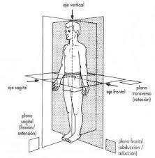 Resultado de imagen de planos del estudio de los huesos