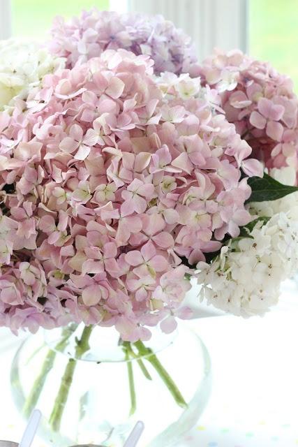 pale pink hydrangeas