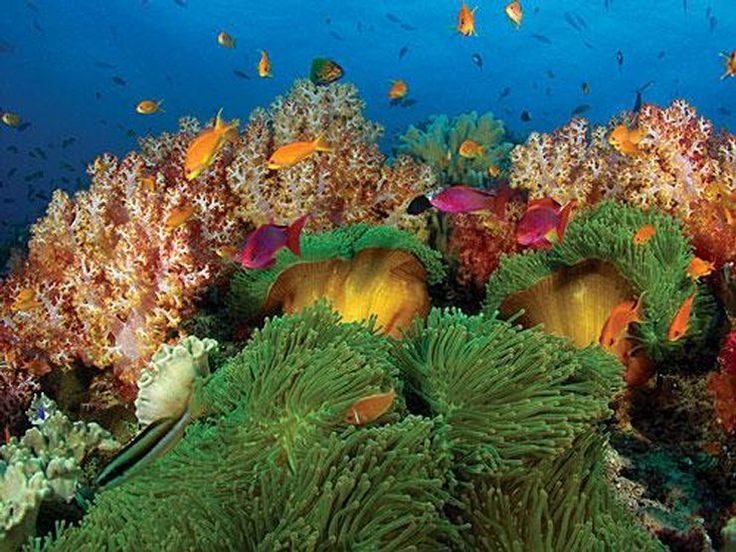 Fidżi - rajskie wyspy