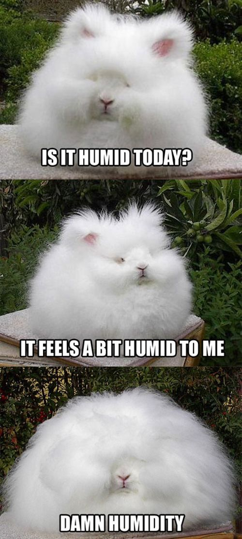 Is it humid today?: Humidity Today, Curly Hair Problems, Hair Doe, My Life,  Angora Rabbit, Funny Stuff, Bunnie, I Cans Relate, Hair Looks