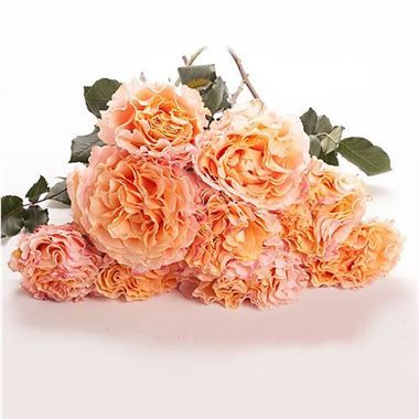 Peach Garden Rose Bouquet 66 best wedding rose varieties images on pinterest | rose