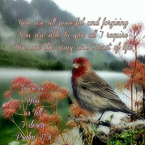 Psalm 27:4 (KJV) Through the tender mercy of our God; whereby the dayspring from on high ....,,,ecard