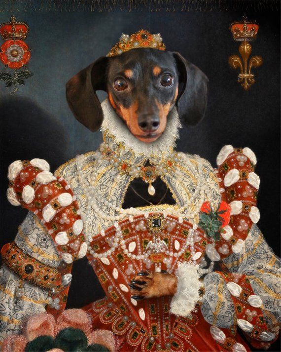 Dachshund Art Wiener Dog Queen Royalty Dog Artwork Pet Portrait