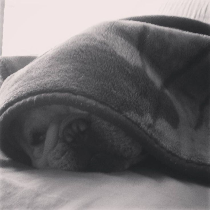 Descansando! #relax #americanadecolchones #frenchie #bulldog #frenchgirl #frenchbulldog #french #bulldogfrances #sweetdreams #sweethome