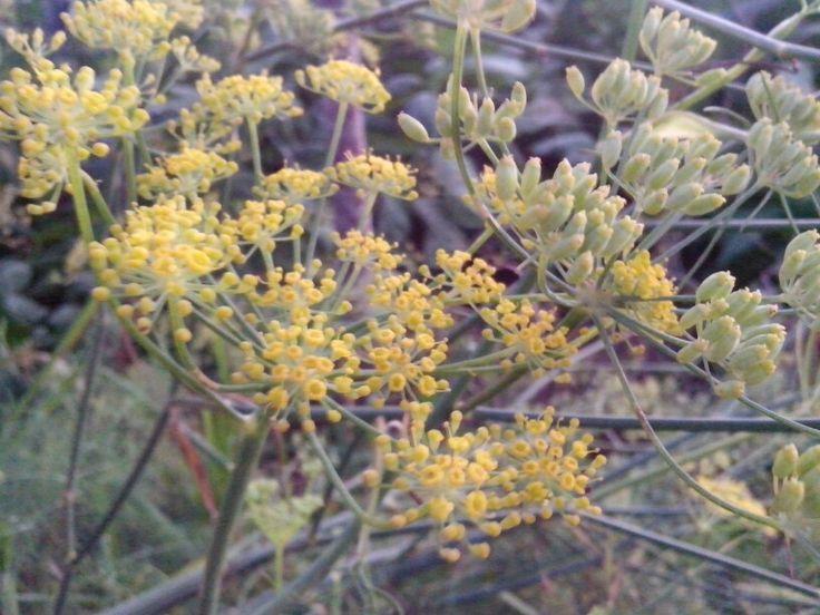 Flowers of Adas #Selo #Boyolali