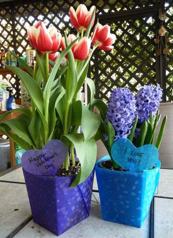 "A quick fix for Valentine's Day potted plant gifts - use plastic ""take out"" containers from the dollar store! Learn more on the Birds & Blooms Blog. I like these for Easter better!"