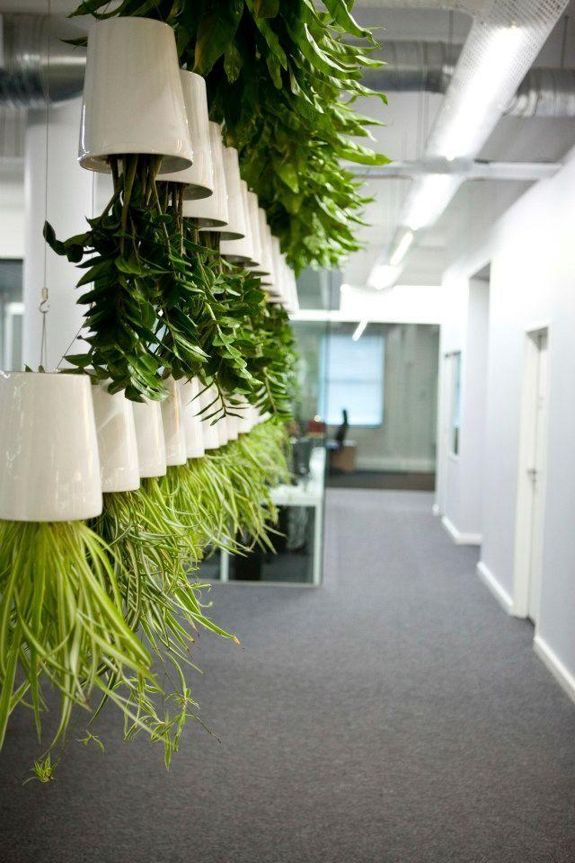 Boskke pots installation. Clever use of plants 'upside' down!
