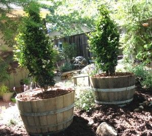 Half Wine Barrels: Planting 101