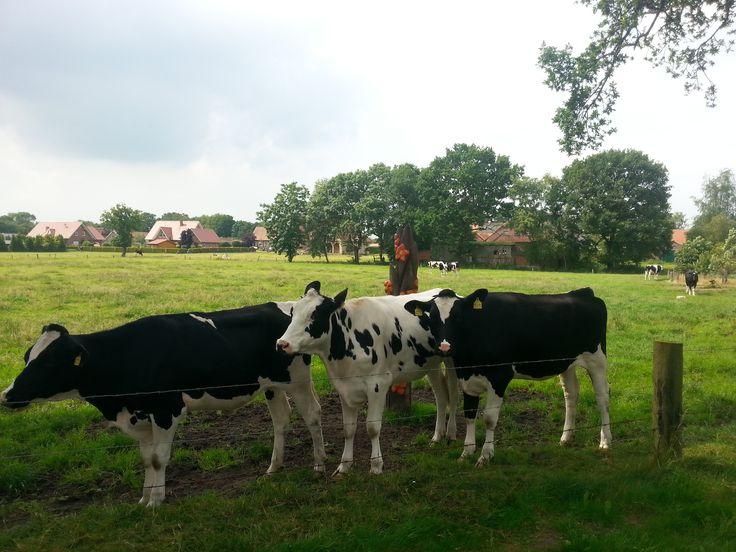 Entlang des Ostfriesland Wanderweges befinden sich 23 Kunstscheuerpfähle, an denen sich Kühe und Co. genüsslich schubbern können...