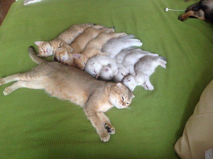 Фото Смешные кошки. Альбом Смешные кошки 9 - 85 фото. Фотографии Wallpaper Man.