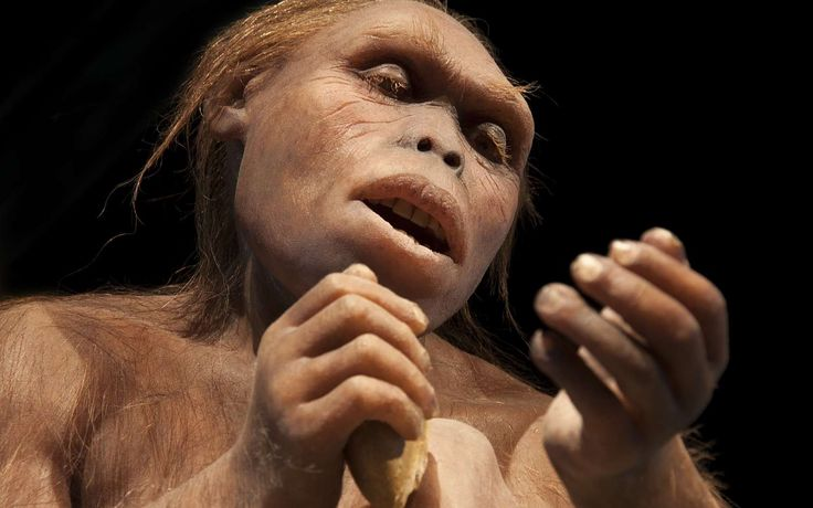 Lucy est un australopithèque de l'espèce Australopithecus afarensis dont le squelette a été découvert en 1974 à Hadar, dans les dépressions de l'Afar en Éthiopie, au bord de la rivière Awash. Son...
