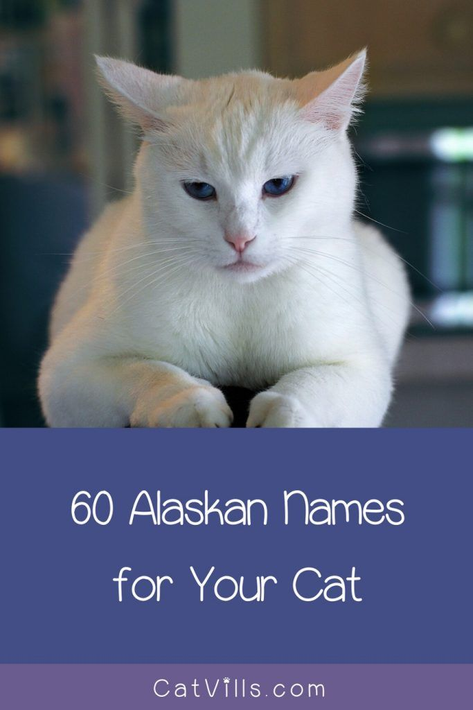 120 Adorable Unisex Tabby Cat Names In 2020 Cute Cat Names