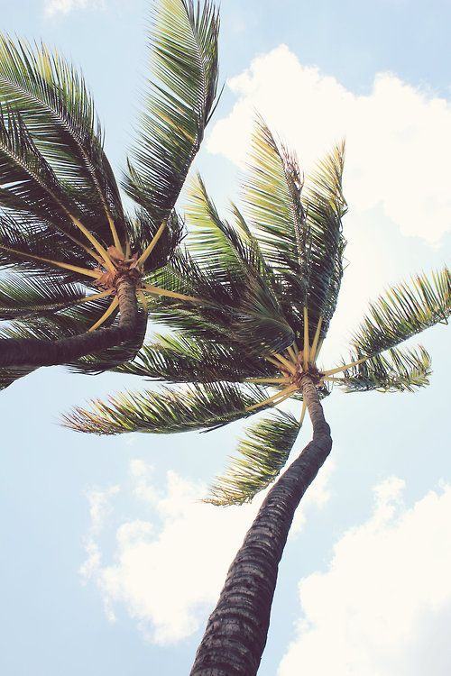palm trees: