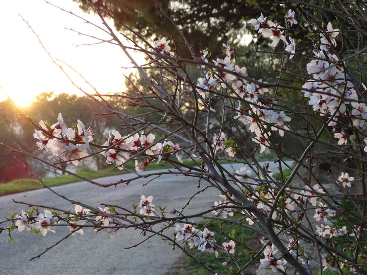 The road to our entrance is plentiful with almond trees.