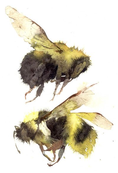 two bumble bees - Kate Osborne (I know they are not Apis M....but they still make me wish I could fly.)