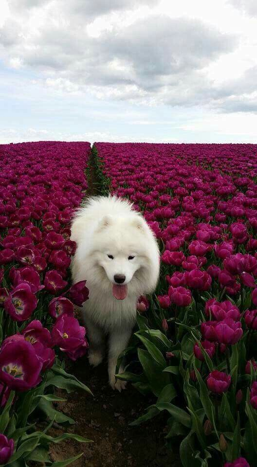 Cachorro e jardim de flores! Como não amar a natureza e sua perfeição.