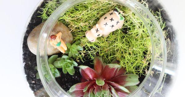 O terrário é um mini jardin perfeito para decorações internas e espaços pequenos, desde que receba iluminação natural. Vamos mostrar como você pode fazer um terrário em poucos minuto! Confira: