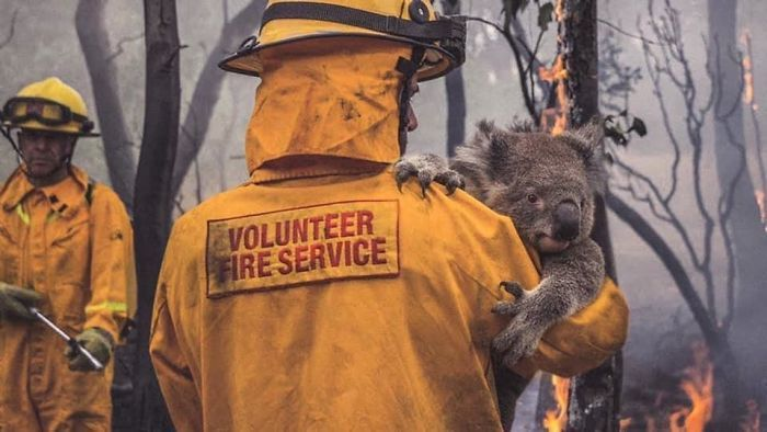 This Fire Fighter And All Ff S Saving The People Animals And
