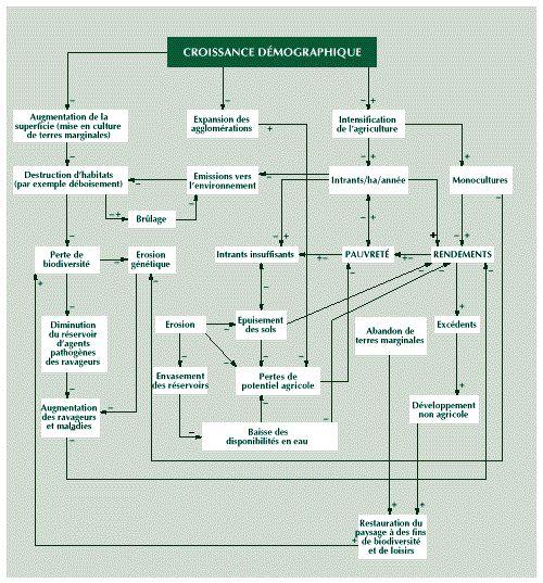 Production alimentaire et impact sur l'environnement
