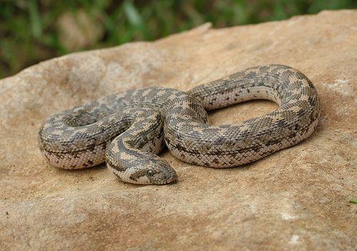 Λάρισα: Η πόλη γέμισε φίδια