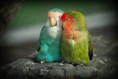 cute: Snuggles, Parrots, Color, Pet, Creatures, Funny Quotes, Lovebird, Beautiful Birds, Adorable Animal