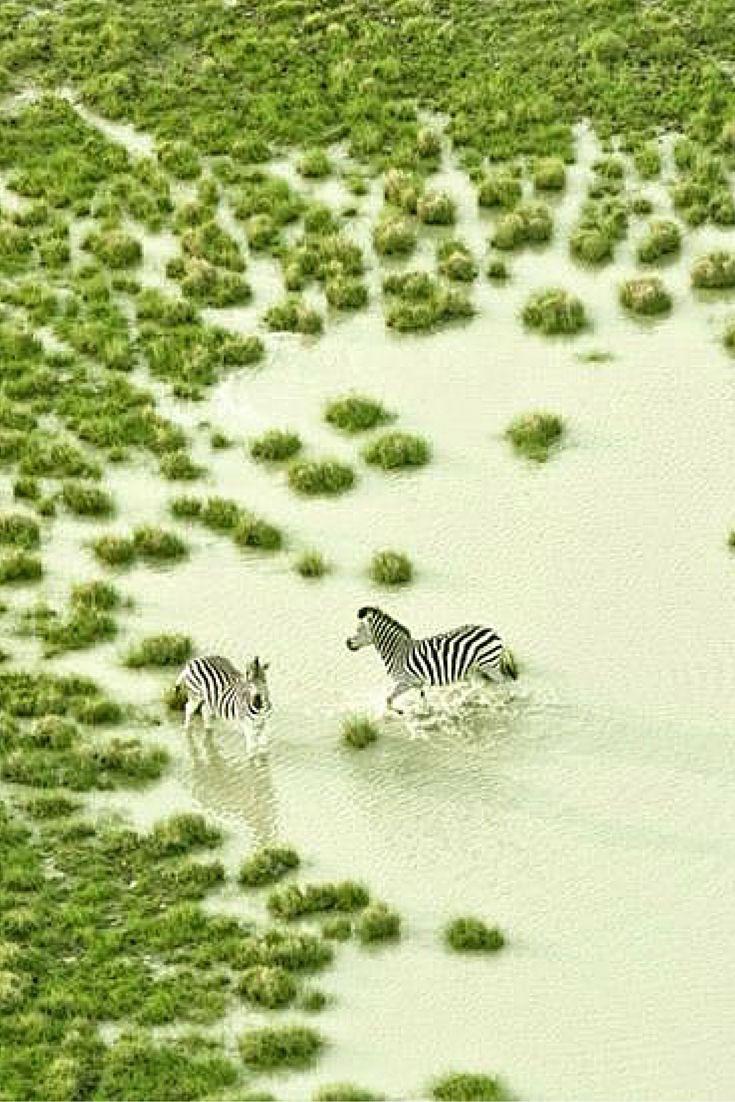 Botswana - Zack Seckler | LESS IS ART | lessisart.altervista.org