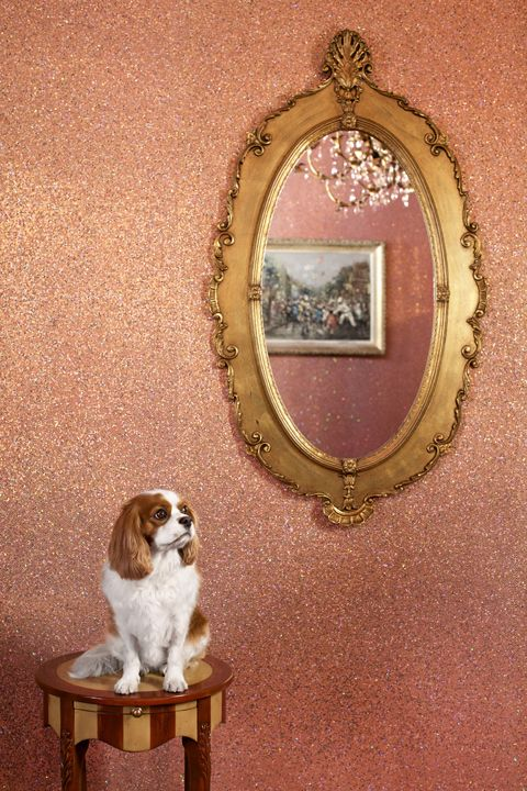 Pink Glitter Walls, and a sweet little puppy!