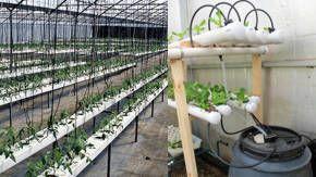 agricultura hidroponica en invernadero