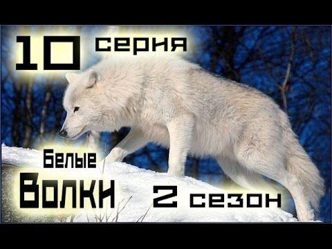 Сериал Белые волки 10 серия 2 сезон (1-14 серия) - Русский сериал HD
