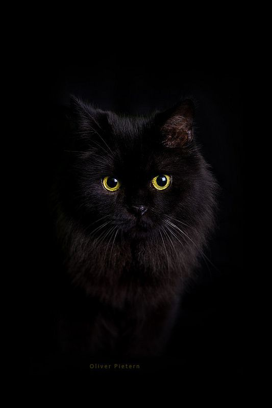 Black cat  Balou